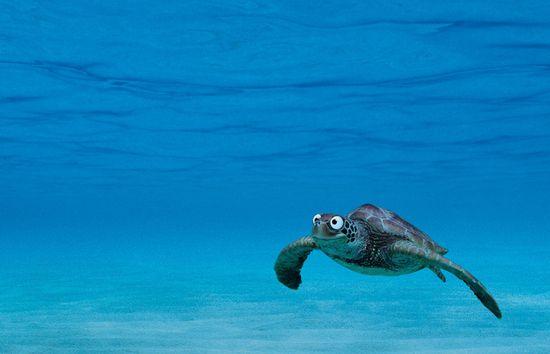 Реклама купальников от Wonderbra - удивите рыб своим бюстом