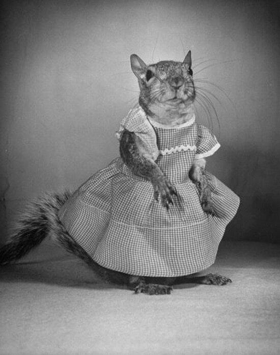 Белка-модница покорила США в 40-е